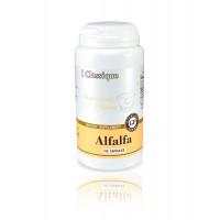 Alfalfa — Альфальфа. Трава люцерны.