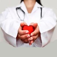 Сердечно-сосудистая система (4)